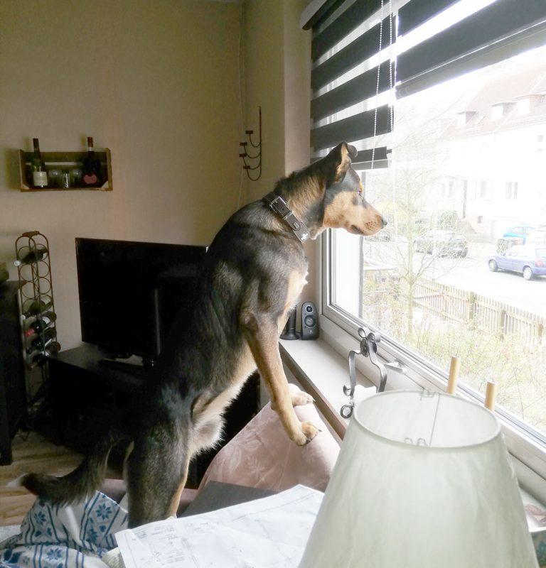 Hundetage